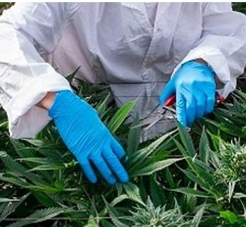 cannabis medicines - courtesy of BBC site